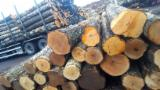 Offers Latvia - Birch Logs 18+ cm A / AB
