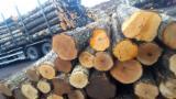Orman ve Tomruklar - Kerestelik Tomruklar, Huş Ağacı