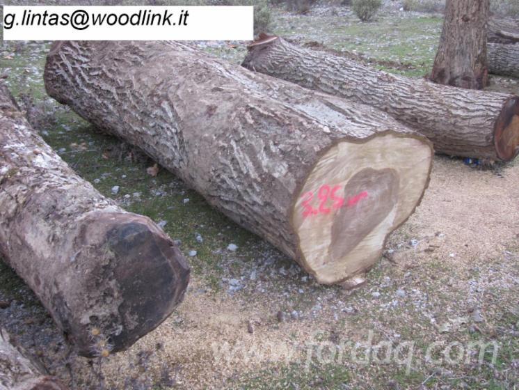 Furnierholz--Messerfurnierst%C3%A4mme