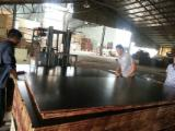 Brown / Black film faced birch plywood, shuttering construction plywood
