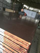 覆膜胶合板(棕膜), 桦木