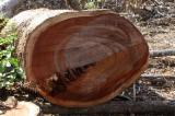 Tropical Wood  Logs For Sale - Tropical logs seller