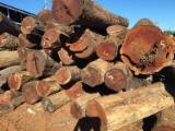 Tropenrundholz Zu Verkaufen - Schnittholzstämme, Mosambik