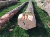 White Ash Logs Wanted, diameter 30+ cm