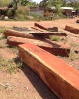 森林和原木 非洲  - 锯材级原木, 非洲格木