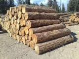 Softwood  Logs For Sale - Logs pine