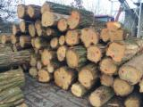 Hardwood  Logs - 18+ cm Acacia Saw Logs Poland