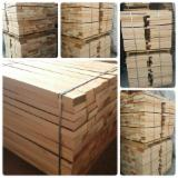 Forest and Logs - 50 mm Beech  from Bosnia - Herzegovina