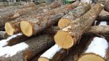 Hardwood Logs Suppliers and Buyers - 36-75 cm Oak  Saw Logs from France