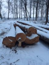 Softwood  Logs For Sale - Larch  20+ cm Furnir ;  A,B  Saw Logs from Romania