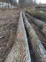 Hardwood  Logs - 25+ cm Oak  from Romania, Suceava