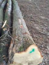 Hardwood  Logs - 25+ cm Oak  Saw Logs from Romania, Suceava