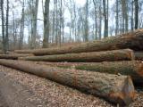 Softwood  Logs - Douglas Fir  43-53 cm  Quality B Saw Logs from Germany