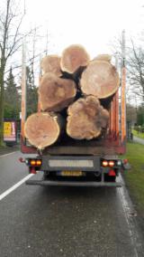 Laubholz  Blockware, Unbesäumtes Holz Niederlande - Blockware, Buche