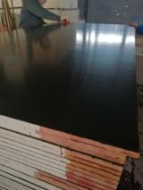 18 x 1220 x 2440 mm Poplar Core Black Film Faced Plywood