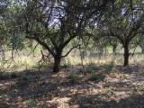 Ogrevno Drvo - Drvni Ostatci Drva Za Potpalu Oblice Necepane - Jabuka Drva Za Potpalu/Oblice Necepane Rumunija