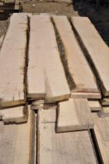 Hardwood  Unedged Timber - Flitches - Boules - White Ash  Loose from Russia