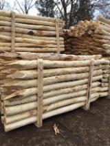 Acacia poteaux enjeux écorcés pointue