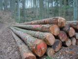 Germany Softwood Logs - Larch  20-45 cm BC Saw Logs from Germany