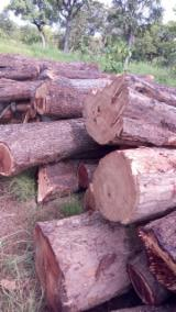 Tropical Wood  Logs - Offer to sell african rosewood logs/squares