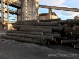 > 26 cm Oak  Saw Logs from Romania, Valcea