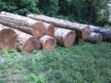 Wenge Tropical Logs - East African Logs
