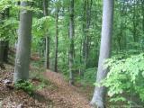 Beech  Hardwood Logs for sale. Wholesale exporters - Saw logs Beech