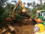Wälder Und Rundholz Nordamerika - Schälfurnierstämme, Eukalyptus, Guatemala