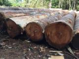Wälder Und Rundholz Südamerika - Baco Wood