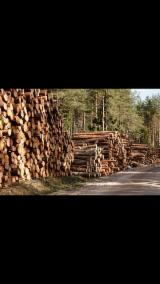 Pine and spruce logs for sale