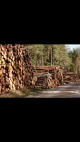 Schnittholzstämme, Fichte/Tanne/Kiefer