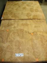 Furnierhandel - Laub Und Tropenholzfurnier - Hard Maple, Zuckerahorn, Rundschälfurnier, Knollenmaserung