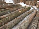 Hardwood Logs For Sale - Register And Contact Companies - Tilia Saw Logs 3+m