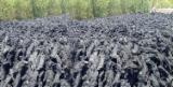 Marruecos Suministros - Venta Briquetas De Carbón Pino Douglas , Abeto , Abeto De Nordmann - Abeto Caucásico Atlas Marruecos