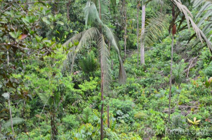 Forest-with-300-hectares-of