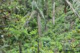 Standing Timber Colombia - Forest with 300 hectares of land