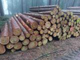 Germany Softwood Logs - Larch  15-40 cm B/C Saw Logs from Germany