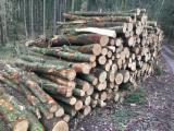 Oak  Firewood, Pellets And Residues - Oak  Firewood/Woodlogs Not Cleaved