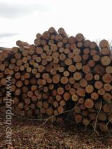 France Softwood Logs - Fir/Spruce/Pine 30+ cm + Saw Logs France