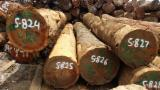 Tropical Wood  Logs - Sapelli log offer
