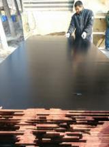 12 mm Film Faced Plywood Poplar Core