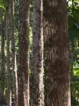 Лісисті Місцевості - Венесуела
