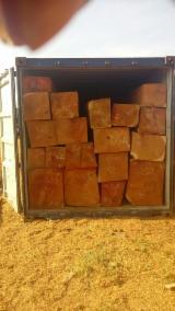 Hardwood  Logs - Hard wood doussie