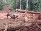 Laubschnittholz, Besäumtes Holz, Hobelware  Zu Verkaufen - Iroko