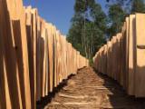 Tranchage Vietnam - Vend Placage Naturel Eucalyptus Dosse