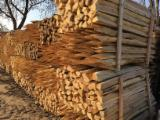Forest And Logs - Split Acacia Stakes for Wineyard