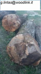 Finden Sie Holzlieferanten auf Fordaq - Woodlink IT g.l. - Schnittholzstämme, Walnuss