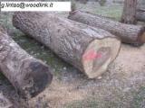 森林和原木 - 单板级原木, 胡桃木(欧洲的)