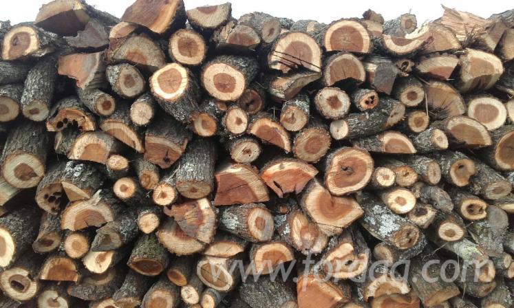 vend grumes pour bois de chauffage acacia sud america uruguay. Black Bedroom Furniture Sets. Home Design Ideas