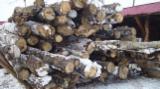 Firewood - -- mm Poplar Firewood Romania